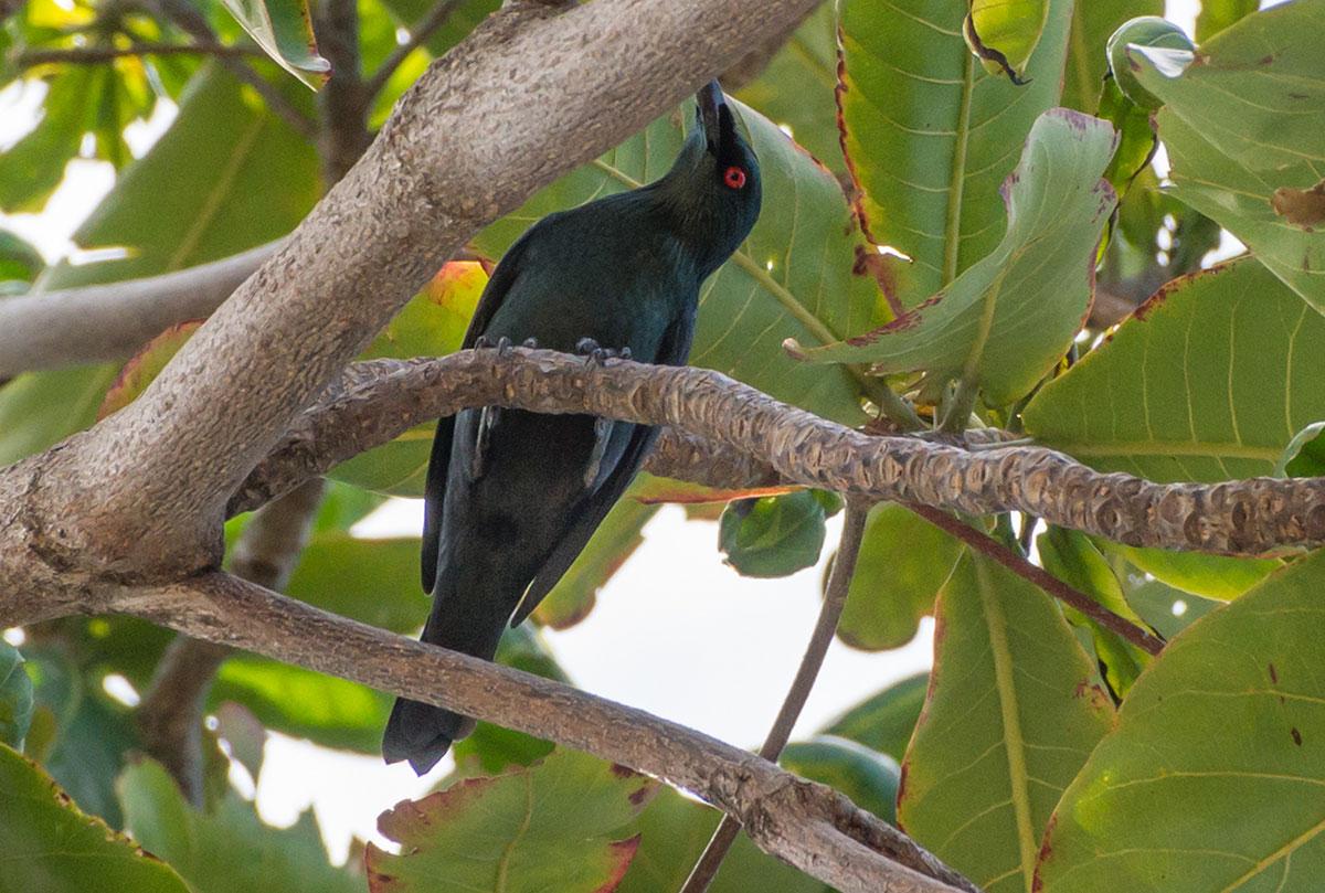 Bird, Bunaken Island, Manado, Indonesia