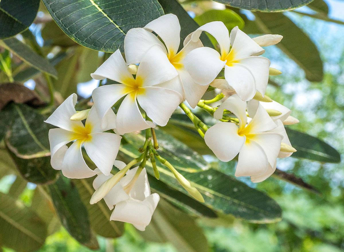 Flowers, Bunaken Island, Manado, Indonesia