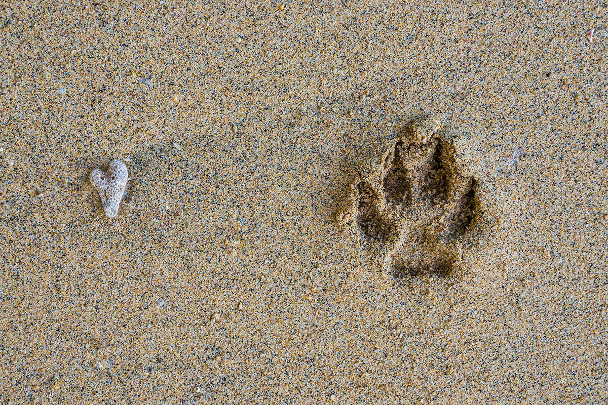 Footprint in Sand, Seabreeze Resort, Bunaken Island, Manado, Indonesia