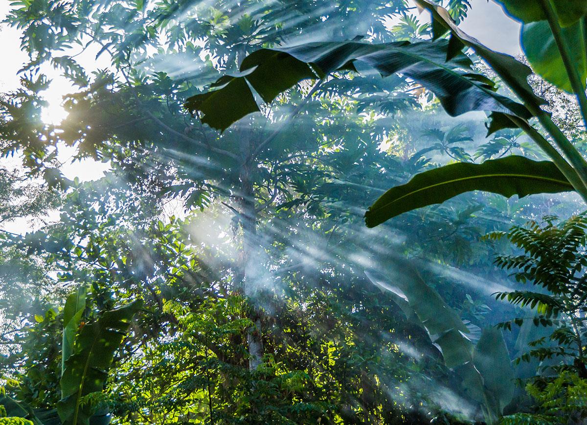 Rainforest, Seabreeze Resort, Bunaken Island, Manado, Indonesia