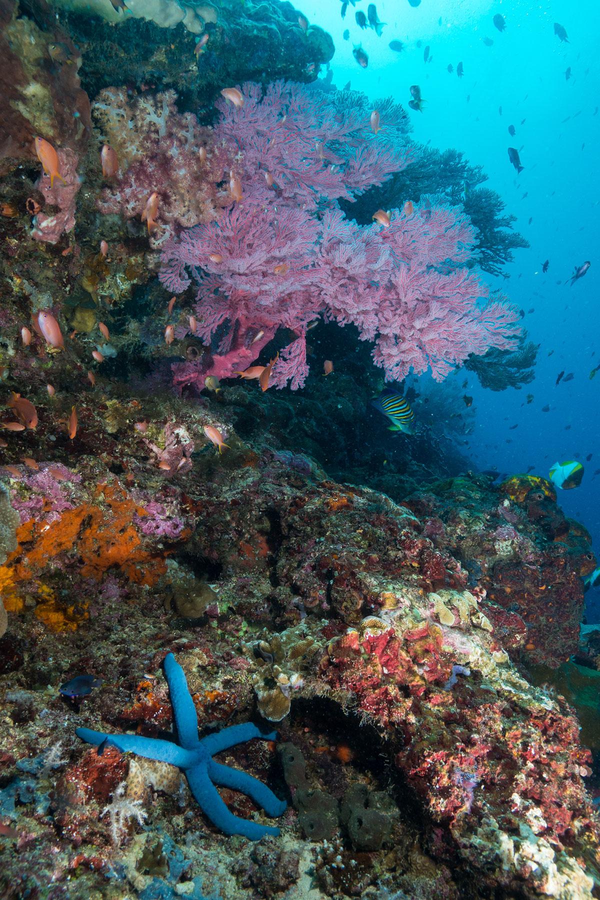 Coral Reef, Bunaken Island, Manado, Indonesia