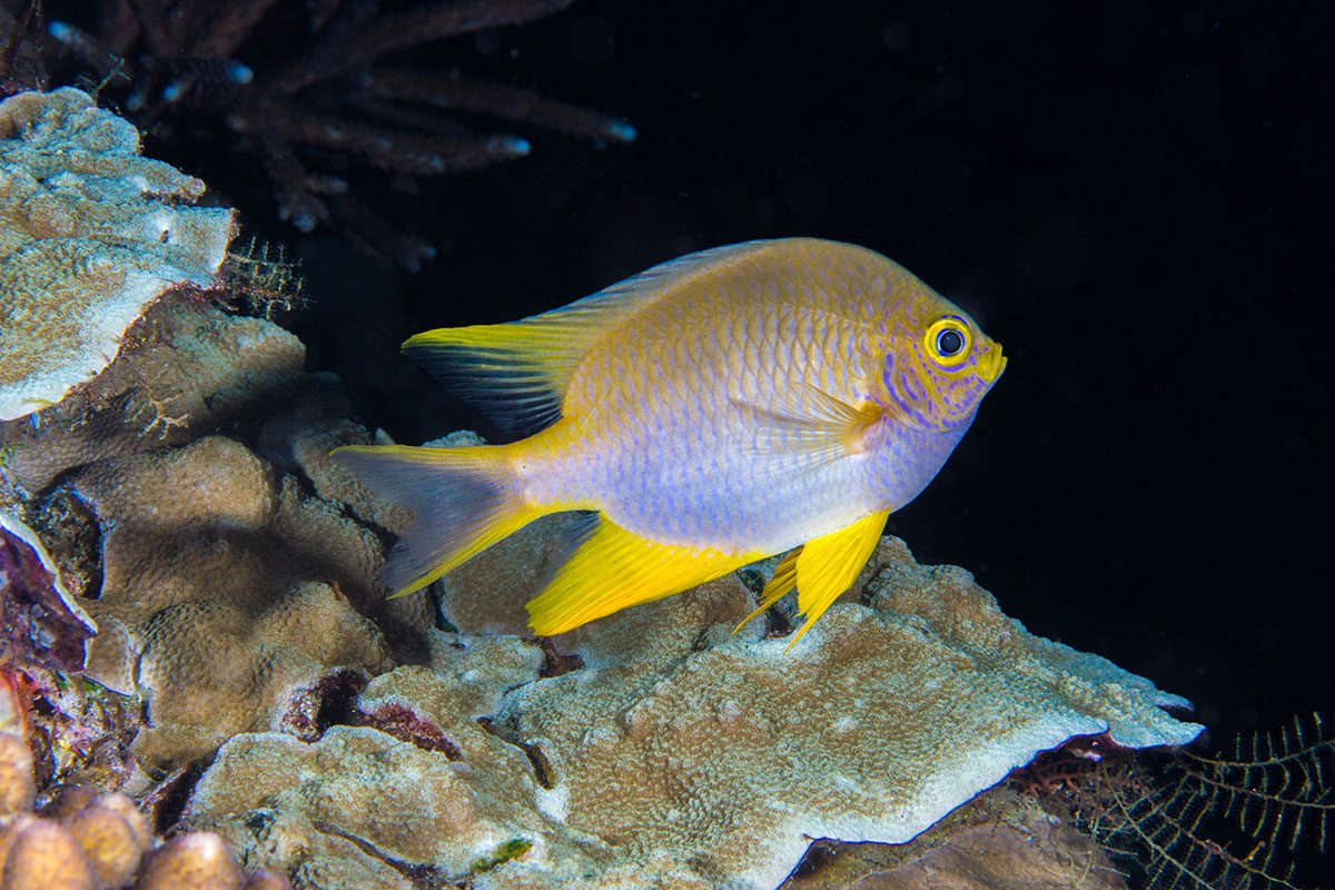 Fish, Bunaken Island, Manado, Indonesia