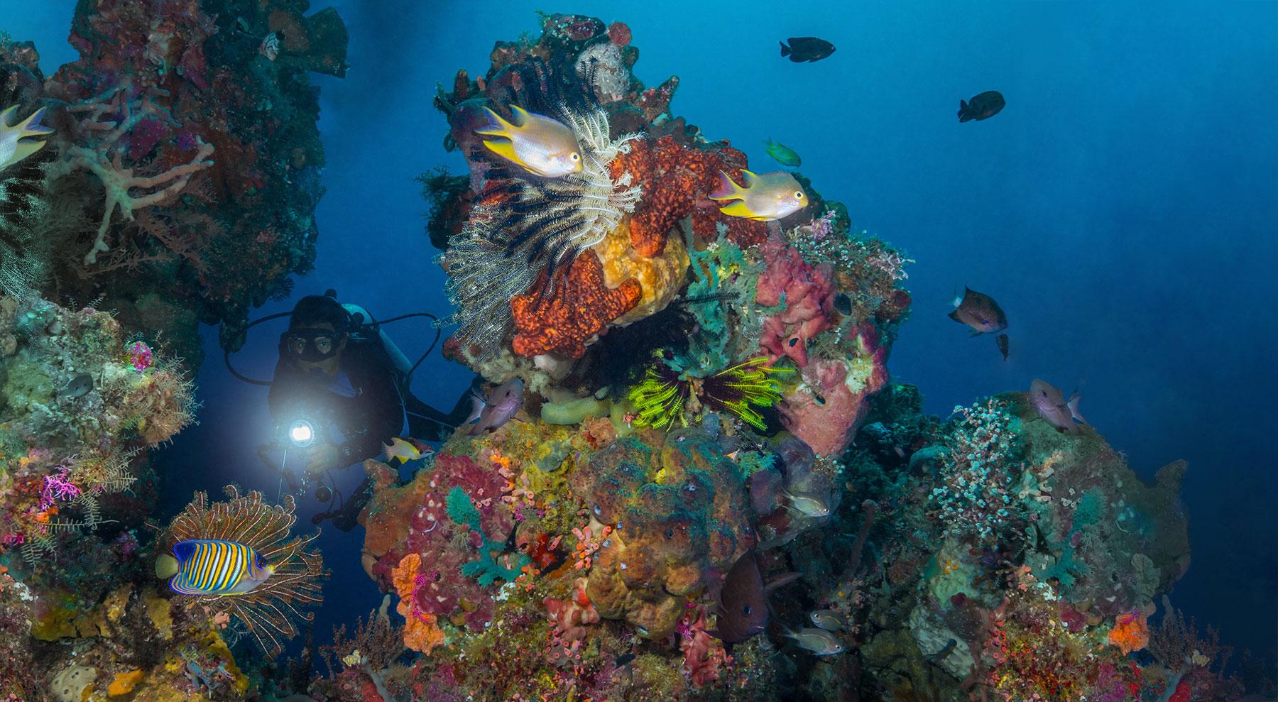 Discover a marine park